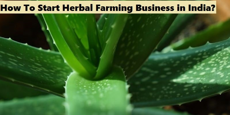 Herbal Farming Business