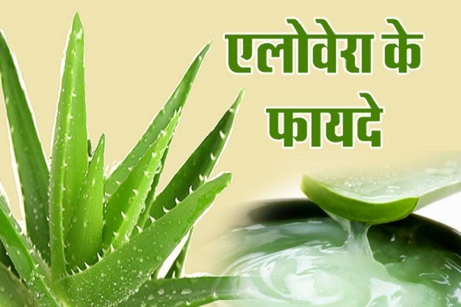 Learn the uses and benefits of aloe vera here