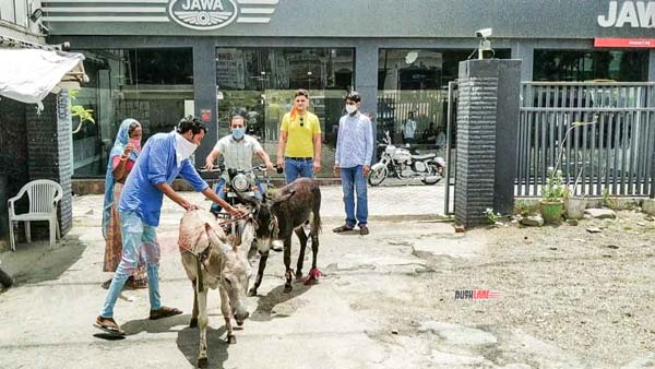 Jawa Owner Brings Donkeys Outside Delearship: Java owner brought donkey to dealership, learn what is the reason