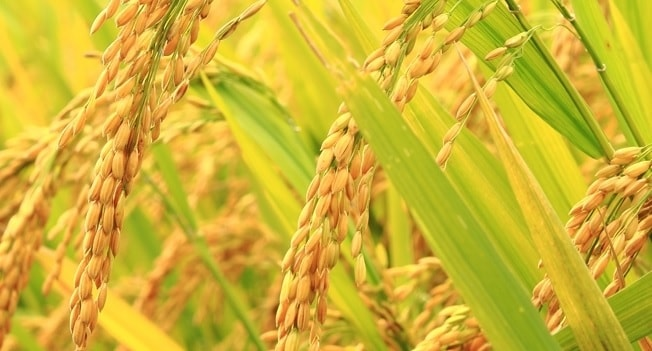 How to start a grain business