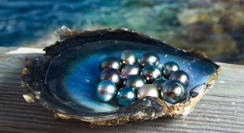 Know how pearl farming is Start a low cost pearl business