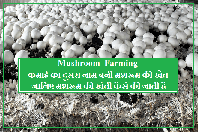 mushroom-farming-became-another-name-for-earning