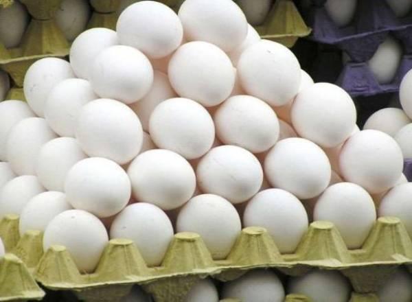 Egg Trays Business Idea