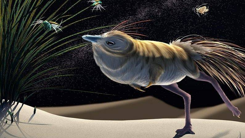 Shuvuia Desersa: A dinosaur looking like a pheasant equipped with 'night vision', used to hunt prey like this