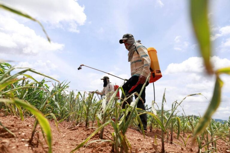 India Pesticides IPO: Strong Valuation and Reasonable Valuation, Should You Invest?
