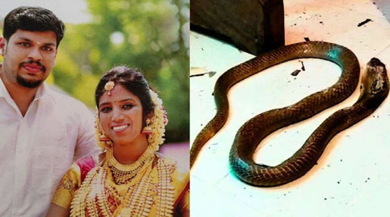 Court sentences life imprisonment to Kerala man who killed his wife by being bitten by a cobra